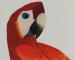 Le perroquet qui attendait le soleil